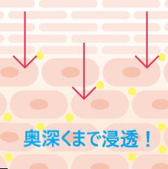 ヒルドイドフォルテクリームは角質層の奥深くに届いてお肌ぷりぷりに!